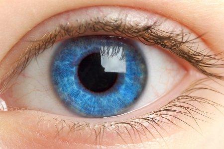 голубой глазик