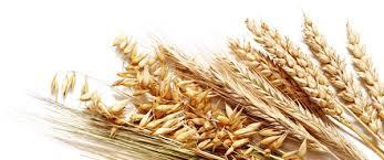 пшеничный отвар от зуда