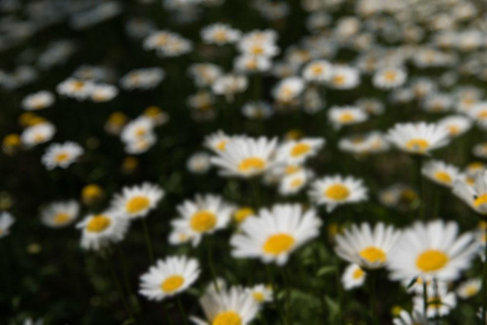 цветы при астигматизме