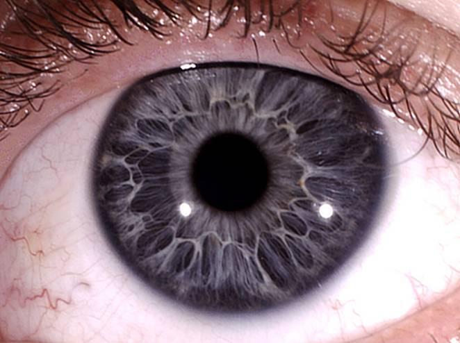 серые глаза глаз